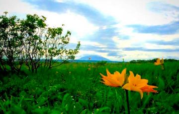 サロベツ湿原